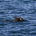 Photo of Monterey Bay Whale Watch