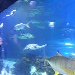Bilde fra Oceanarium Sea Fairy Tale