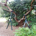 Tree supports