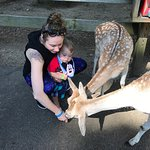 Bilde fra York's Wild Kingdom Zoo and Fun Park