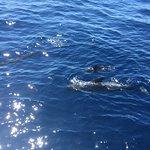 Foto de Royal Delfin