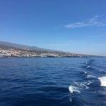 Royal Delfin照片