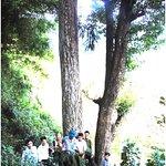 Pu Huong Nature Reserve - Nghe An