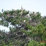 Nesting Central