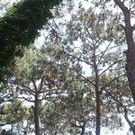 Такие кроны деревьев практически над всей территорией отеля.