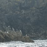 There's always the guillemots to keep you amused