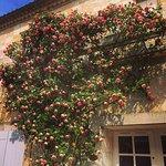 Le rosier Pierre de Ronsard sur la terrasse