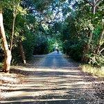 Φωτογραφία: Stevens Creek Trail