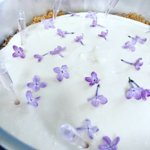 Lilac cheesecake - Dessert Special