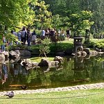 View overlooking the pond in Kyoto Garden