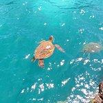 Turtle taking a breath along shore