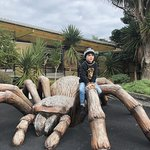 Hanging out on a giant tarantula!