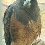 Foto de World Center For Birds of Prey
