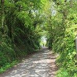 Camel Trail Bike Path