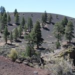 Trees growing on cinder cone
