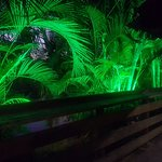 Night palms in the river side garden