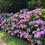 Φωτογραφία: Odawara Flower Garden