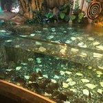 أكواريوم مول اعمار وحديقة حيواناته تحت الماء