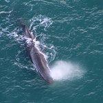 Φωτογραφία: Wings Over Whales