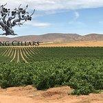 Our Bush Vine Vineyards