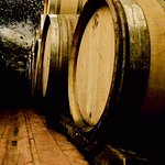 Wine cellar Visit