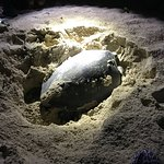 Bild från Turtle Island Park