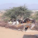 Desert Pushkar, Rajasthan (India)