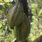 Bild från Satria Coffee Plantation