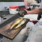 Walleye and Sun Fish