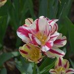 Valokuva: Garvan Woodland Gardens