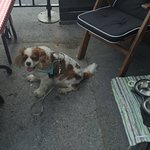 Also dogs are welcome in our terrace.