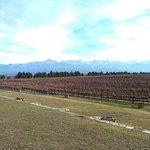 Photo of Ampora Wine Tours