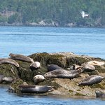Seals sunning themselves