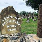 Foto Petrified Wood Park