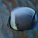 Foto de Dive Rarotonga