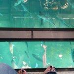 Glass Bottom Boat Whitianga Photo