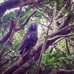 ZEALANDIA Sanctuaryの写真