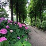 Изображение Moriyama Ashikarien Garden