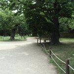Bild från Gyerim Forest