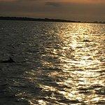 Bilde fra Captain Derek's Dolphin Adventure