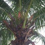 Birds nesting in trees