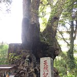 Bilde fra Kinomiya Shrine