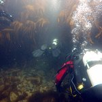 Scuba Diving North West-billede