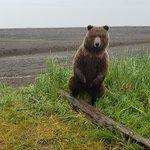 Foto de Alaska Ultimate Safaris
