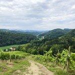 Der Vital-Wanderweg führt direkt an unserem Weingut vorbei und bietet eine wunderschöne Aussicht