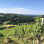 Von unserem Weinberg haben Sie einen wunderschönen Blick auf das gesamte Weingut