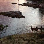 Jong hertje bij zonsondergang