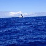 une baleine à bosse vue du bateau