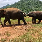 Elephant Nature Park – fénykép