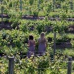 Photo de Ciccone Vineyard and Winery